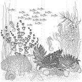 La flore et la faune du fond de la mer Photographie stock libre de droits