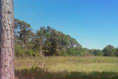 La Florida al aire libre Fotos de archivo