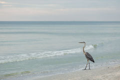 La Florida, Clearwater fotografía de archivo libre de regalías
