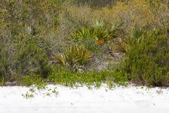 La Floride frottent Photo libre de droits
