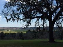 La Floride Live Oak et mousse espagnole Image libre de droits