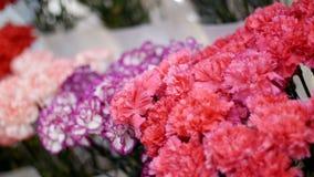 La floristería, en la demostración-ventana allí es muchos ramos de flores del clavel metrajes