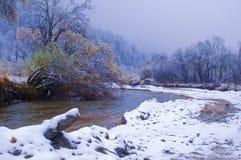 La foglia colorized nella nevicata Fotografia Stock Libera da Diritti
