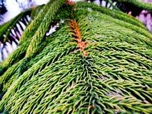 La foglia dell'albero ci dà il messaggio per l'ambiente di risparmio fotografie stock libere da diritti