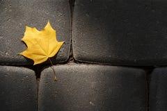 La foglia di acero gialla che si trova sulla pavimentazione ha fatto il ‹del †del ‹del †della pietra naturale Immagini Stock