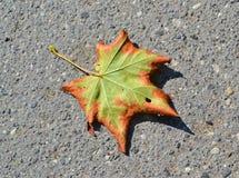 La foglia di acero sull'asfalto Fotografie Stock Libere da Diritti