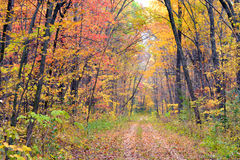 La foglia di autunno ha coperto il percorso attraverso la foresta Immagini Stock