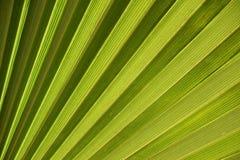 La foglia di palma Fotografia Stock Libera da Diritti