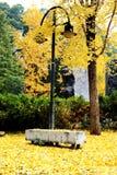 La foglia e l'albero dorati nella città di Chang-Sha Immagini Stock