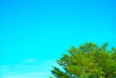 La foglia ed il cielo blu verdi dell'albero fotografie stock