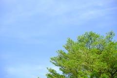 La foglia ed il cielo blu verdi dell'albero fotografia stock