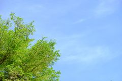 La foglia ed il cielo blu verdi dell'albero fotografia stock libera da diritti