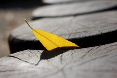La foglia gialla di autunno attaccata in di legno collega il giorno di autunno fotografia stock libera da diritti