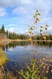 La foglia ha coperto il ramoscello che germoglia dal litorale sopra Fotografie Stock Libere da Diritti