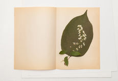 La foglia secca della ciliegia di uccello e del lillà fiorisce sul foglio di vecchia carta Immagini Stock