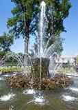 La fontaine de gerbe Petrodvorets petersburg Photo libre de droits