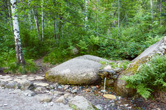 La fonte di acqua naturale, fonte, attraversante oscilla in foresta Fotografie Stock Libere da Diritti