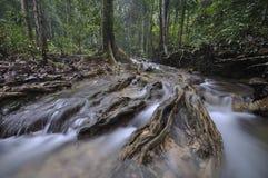 La forêt équatoriale avec des arbres et des buissons Photographie stock libre de droits
