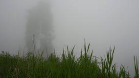 La forêt a été couverte de brouillard Dessus verts des arbres coniféres, de l'herbe et des buissons clips vidéos