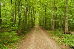 La forêt images libres de droits