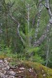 La forêt Image stock