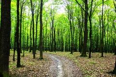 La forêt Images stock
