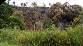 La forêt Photo libre de droits