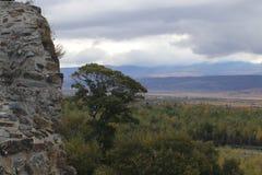 La forêt après le mur en pierre photographie stock libre de droits