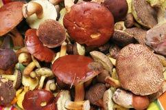 La forêt comestible répand vraie photo Photographie stock libre de droits