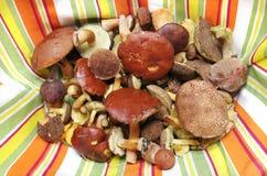 La forêt comestible répand vraie photo Image stock