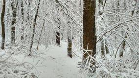 La forêt couverte de neige photographie stock libre de droits