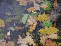 La forêt d'automne assortie part sous la vue supérieure de glace Photos stock