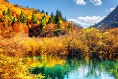 La forêt d'automne s'est reflétée dans l'étang avec de l'eau en cristal vert Photos libres de droits