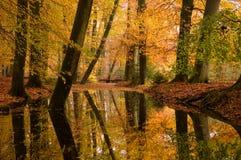 La forêt d'automne s'est reflétée dans un flot Photos stock