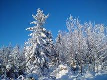 La forêt d'hiver photographie stock
