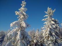 La forêt d'hiver photos libres de droits