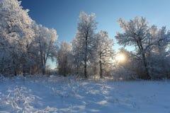 La forêt d'hiver avec la neige photos libres de droits