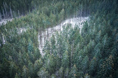 La forêt d'hiver dans le paysage de montagnes Images libres de droits