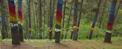 La forêt d'Oma, Kortezubi, Bizkaia Image libre de droits