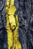 La forêt d'Oma, réservation de biosphère d'Urdaibai Photo stock