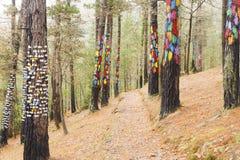 La forêt d'Oma, réservation de biosphère d'Urdaibai Images libres de droits