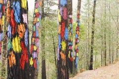 La forêt d'Oma, réservation de biosphère d'Urdaibai Photos stock