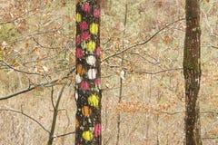 La forêt d'Oma, réservation de biosphère d'Urdaibai Photographie stock libre de droits