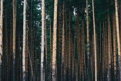 La forêt dans le zoo de Yaroslavl Photographie stock libre de droits