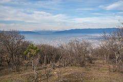 La forêt dans les collines au-dessus de Tbilisi Images libres de droits