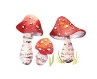 La forêt de Bohème d'aquarelle répand affiche, illustration d'amanite d'isolement par région boisée, agaric de mouche, boletus, o Image stock