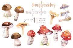 La forêt de Bohème d'aquarelle répand affiche, illustration d'amanite d'isolement par région boisée, agaric de mouche, boletus, o Photo stock