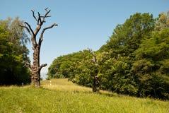 La forêt de châtaigne, où les partisans ont été pendus par les Allemands, la deuxième guerre mondiale Photo stock