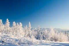 La forêt de Frosen a descendu par coucher du soleil Photos libres de droits