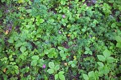 La forêt de géranium fleurit la forêt de nature d'été photographie stock